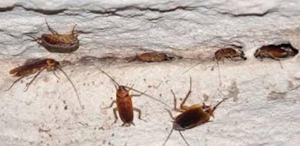 уничтожить-тараканов